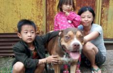 Anjing Pitbull Selamatkan Nyawa Majikannya dari Ular Kobra Berbisa - JPNN.com