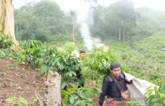 Polisi Temukan Ladang Ganja di Perbukitan Hutan Lindung - JPNN.com