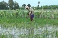 Petani Gigit Jari, 24 Hektare Sawah Terendam Banjir - JPNN.com