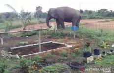 Gajah Liar Masuk Lingkungan Sekolah, Aktivitas Belajar Dihentikan - JPNN.com