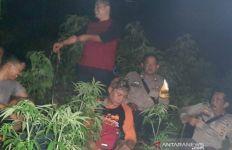 Ladang Ganja di Kaki Gunung Guntur Garut, Begini Kata Polisi - JPNN.com