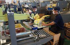 Pabrik Softex Indonesia di Sidoarjo Dilengkapi 7 Mesin Produksi - JPNN.com