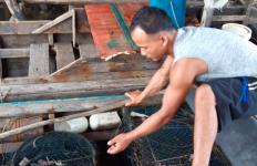 Laut Tercemar Limbah Misterius, Ribuan Ikan Mati Terapung - JPNN.com