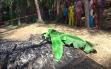 Seorang Perempuan Dibakar di Kebun Kelapa, Tak Ada yang Mengenali Jasadnya
