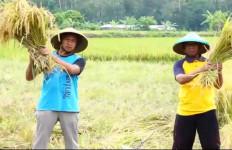 Hingga 24 Januari, Serapan KUR Pertanian Capai Rp577 Miliar - JPNN.com