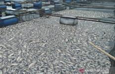 Puluhan Ton Ikan Nila Mati Mendadak - JPNN.com