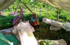 367 Jiwa Mengungsi Akibat Banjir Bandang Jember - JPNN.com