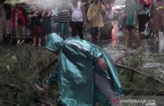 Pengedara Sepeda Motor Tewas Tertimpa Pohon Tumbang, Kondisinya Mengenaskan - JPNN.com