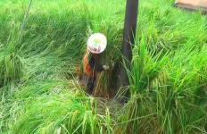 5 Hektare Sawah Padi Rusak Diterjang Angin Kencang - JPNN.com