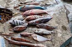 Penjelasan KKP soal Fenomena Ikan Mati Mendadak di Malut - JPNN.com