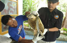 KLHK Selamatkan Penyu Terdampar di Kotok Besar, Lihat Fotonya - JPNN.com