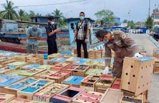 BC Gagalkan Penyelundupan Unggas Asal Thailand di Aceh Tamiang - JPNN.com
