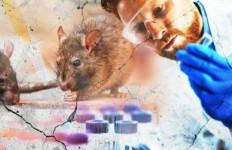 Virus Corona Tenggelam, Terbitlah Hantavirus, Seberapa Berbahaya? - JPNN.com