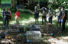 56 Burung Dilindungi Dilepasliarkan di TNBBS Lampung - JPNN.com