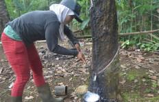 Harga Karet Melejit, Petani di Lampung Bergembira - JPNN.com