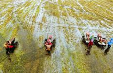 Optimasi Lahan Rawa Siap Tingkatkan Produktivitas Pertanian - JPNN.com