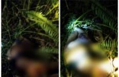 Warga Sei Lepan Langkat Tewas Diterkam Harimau, Kondisinya Mengenaskan - JPNN.com