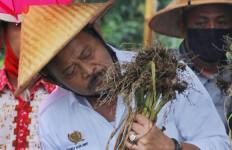 Mentan SYL Panen Bawang Putih di Temanggung, Produk Lokal Lebih Sedap - JPNN.com