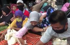 Gegara Kesal, Peternak Bagi-Bagi Ribuan Ekor Ayam Gratis di Pasar - JPNN.com
