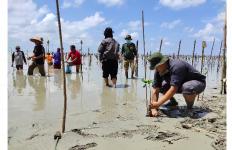 Pandemi Corona, Penyelamatan Mangrove Taman Nasional Way Kambas Tetap Berjalan - JPNN.com