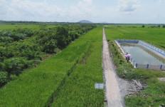 Panen Raya di Pandeglang Tetap Berjalan di Tengah Pandemi Covid-19 - JPNN.com