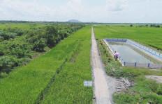 Pemerintah Target Buka Lahan Pertanian Baru di Kalteng - JPNN.com