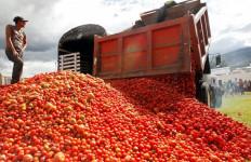 Tomat Melimpah Ruah tak Ada Pembeli, Dipakai untuk Pakan Sapi - JPNN.com