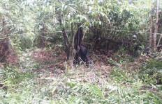 Mayat Membusuk di Puruk Cahu Itu Ternyata Warga Jawa Timur - JPNN.com