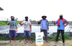 Kabar Baik untuk Petani Udang Indonesia, Ada Pakan Harvestar dari Cargill - JPNN.com