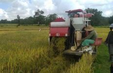 Petani Lampung Berjaya, Surplus Beras Hingga 266.110 Ton - JPNN.com