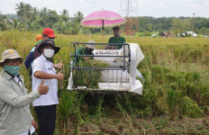 Penyuluh Lampung Tetap Dampingi Petani Panen di Tengah Pandemi COVID-19 - JPNN.com