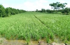 Dorong Produksi Pertanian, Mentan SYL Tinjau 2 Lokasi Optimasi Lahan Rawa - JPNN.com