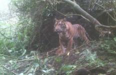 Kisah 6 Warga Diadang 3 Harimau Sumatera, Ada yang Memanjat Pohon hingga Sembunyi - JPNN.com