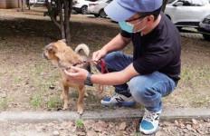 Mengharukan! Anjing Setia Tunggu Majikannya Selama 3 Bulan di Lobi RS - JPNN.com
