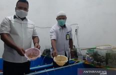 Polisi Amankan Penyelundup Benih Lobster, Nilainya Sangat Fantastis - JPNN.com
