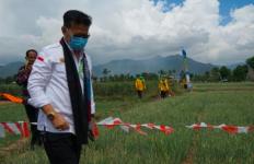 Produksi Bawang Merah Melimpah, Mentan SYL Panen - JPNN.com