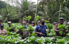 Kelompok Tani di Yapen Panen Sayuran Saat Pandemi Covid-19 - JPNN.com