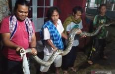 Warga Cianjur Terkejut Melihat Ada yang Muncul dari Dalam Kolam Ikan - JPNN.com