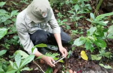 Tumbuhan Langka Banyak Tersebar di Danau Maninjau Agam, Potensi Wisata? - JPNN.com