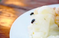 Ini yang Terjadi Ketika Lalat Mendarat di Makanan Anda - JPNN.com