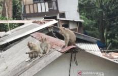 Lihat, Kawanan Monyet Serbu Permukiman Warga, Genting Dirusak, Pakaian Dicuri - JPNN.com