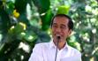 Deklarasi KAMI Ibarat Hanya Gigitan Semut Untuk Jokowi