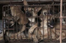 Festival Daging Anjing Kembali Digelar di Tiongkok - JPNN.com