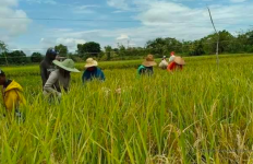 BPS: Juli 2020, NTP dan NTUP Naik, Indikator Kesejahteraan Petani Meningkat - JPNN.com