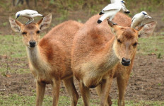 Kabar Gembira, Sebagian Kawasan Ekowisata Mulai Dibuka Untuk Masyarakat - JPNN.com