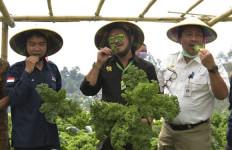 Mentan Syahrul Dorong Budidaya Sayuran Organik dari Petani Milenial - JPNN.com
