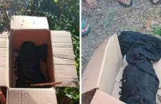 Ada Boks Berisi Bungkusan Hitam di Pinggir Jalan, saat Dibuka Isinya Bikin Kaget - JPNN.com