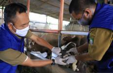 Panduan Penyembelihan Hewan Kurban di Masa Pandemi Corona, Jaga Jarak! - JPNN.com
