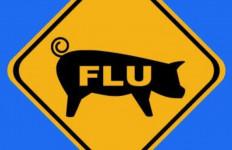 Langkah Kementan Antisipasi Virus Flu Babi Baru Berpotensi Pandemi - JPNN.com
