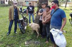 Dua Pencuri Kambing Gembel Dihakimi Warga Jadi Kayak Begini - JPNN.com